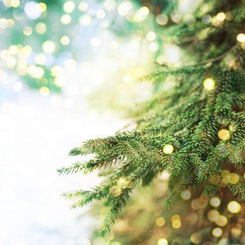 Dags att julskylta webbutiken.